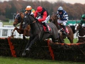 Saphir Du Rheu horse 2015