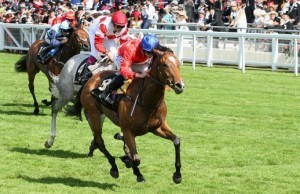 Integral Horse Newmarket