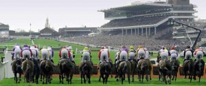 Horse approach the final straight at the Cheltenham Festival.