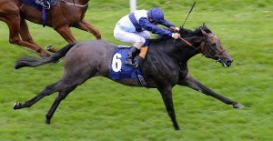 Kingston Hill Horse Doncaster St Leger